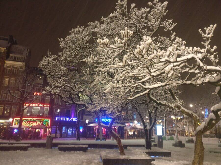 Snowy Tree Rembrandt Square