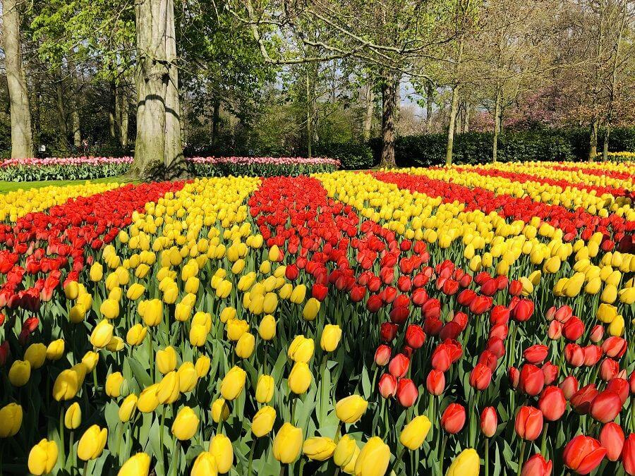 Keukenhof 2019 - red and yellow tulips
