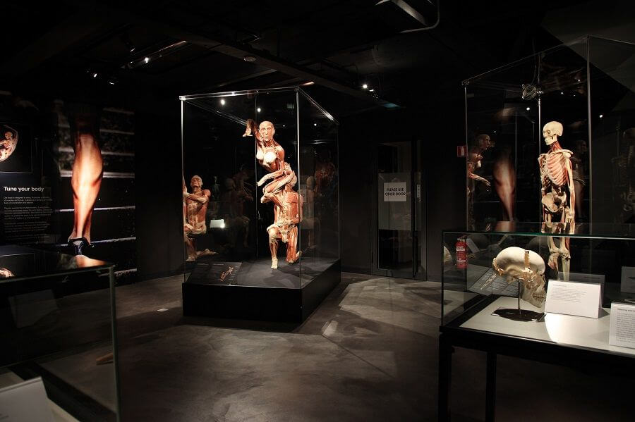 Exhibition BODY WORLDS Amsterdam