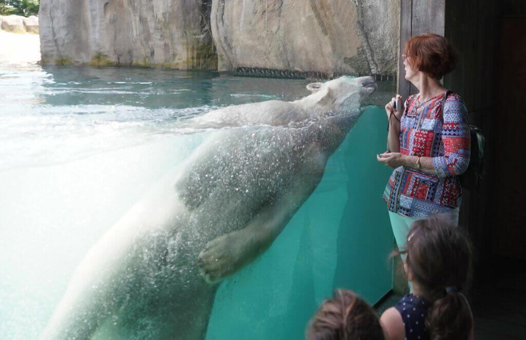 Polar Bear at Rotterdam Zoo