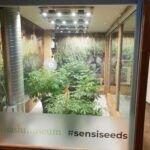 Hash Marihuana & Hennepmuseum