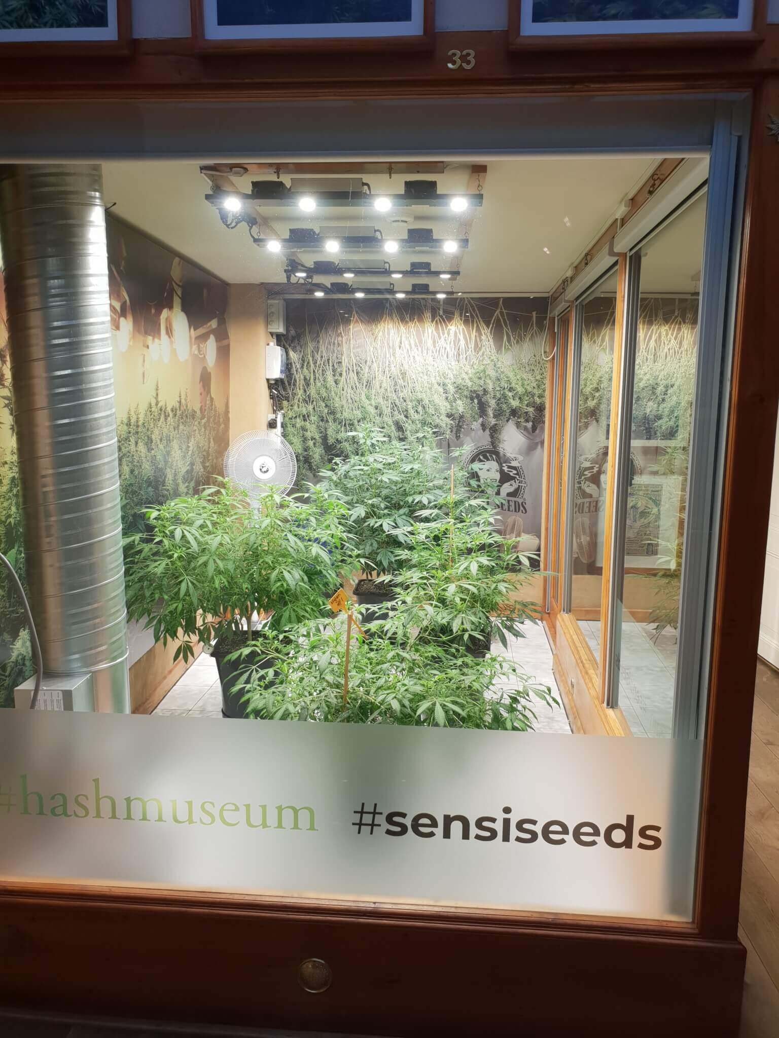 Sensi Seeds at the Hash Marihuana Museum Amsterdam